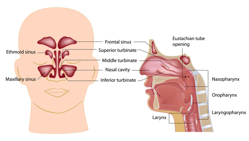 Nasal Specific